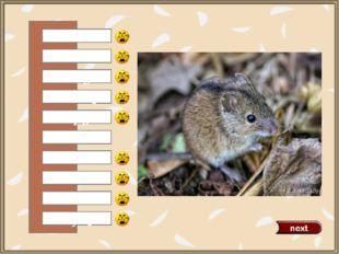 a cat a horse a dog a duck a pig a mouse a hen an owl a fox a rabbit 0 Встав
