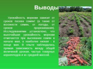 Выводы Урожайность моркови зависит от сроков посева семян! (а также от всхоже