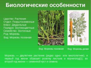 Биологические особенности Царство: Растения Отдел: Покрытосеменные Класс: Дву