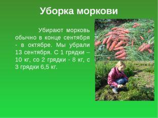 Уборка моркови Убирают морковь обычно в конце сентября - в октябре. Мы убрали