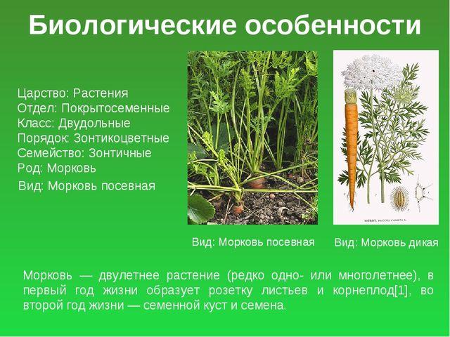 Биологические особенности Царство: Растения Отдел: Покрытосеменные Класс: Дву...