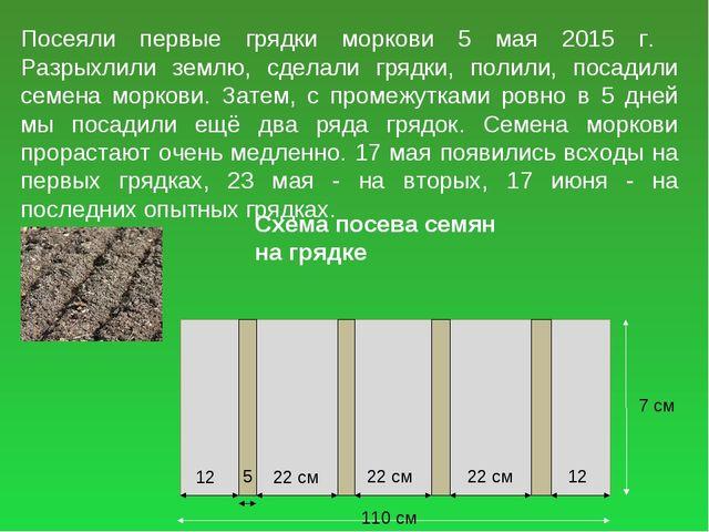 Посеяли первые грядки моркови 5 мая 2015 г. Разрыхлили землю, сделали грядки,...
