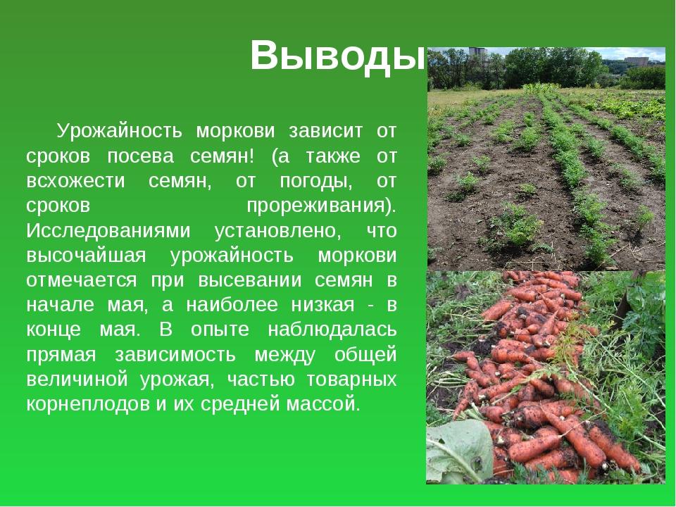 Выводы Урожайность моркови зависит от сроков посева семян! (а также от всхоже...