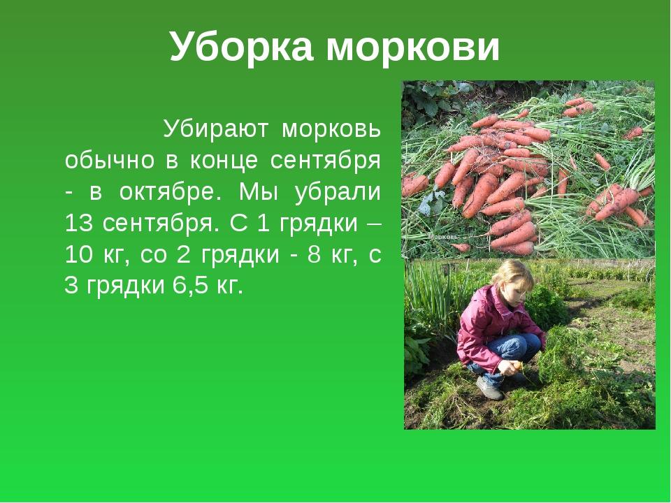 Уборка моркови Убирают морковь обычно в конце сентября - в октябре. Мы убрали...