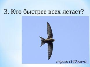 3. Кто быстрее всех летает? стриж (140 км/ч)