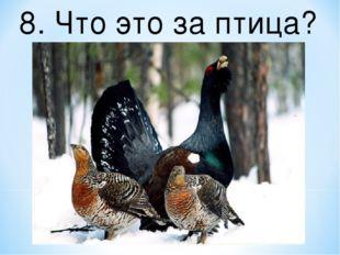 8. Что это за птица?