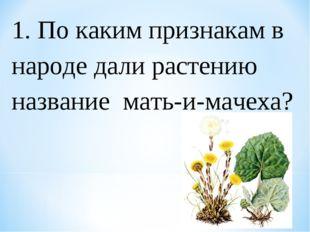 1. По каким признакам в народе дали растению название мать-и-мачеха?