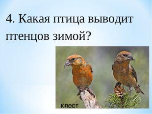 4. Какая птица выводит птенцов зимой? клест