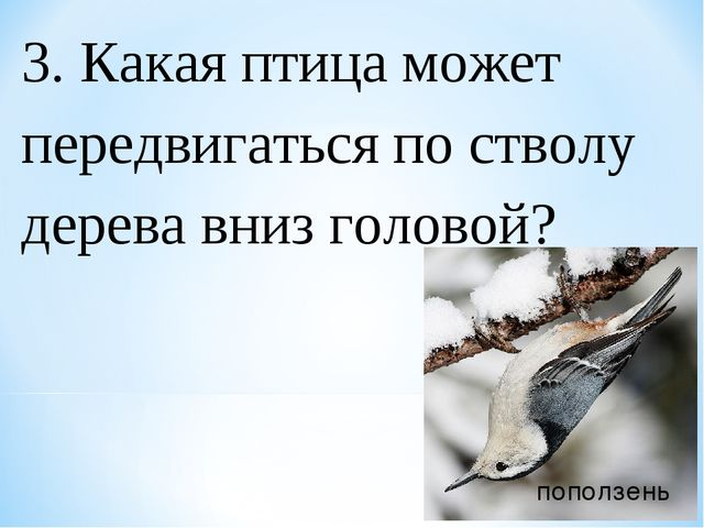 3. Какая птица может передвигаться по стволу дерева вниз головой? поползень