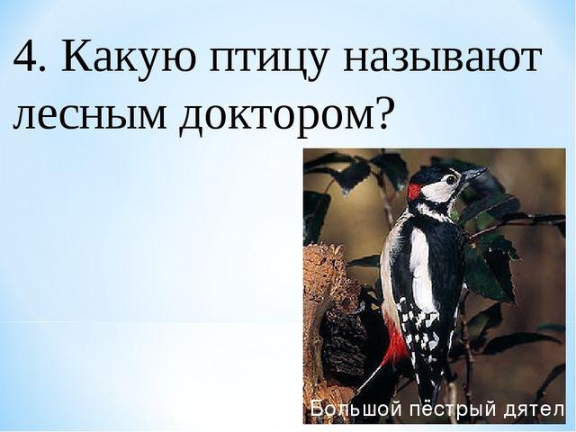 4. Какую птицу называют лесным доктором? Большой пёстрый дятел