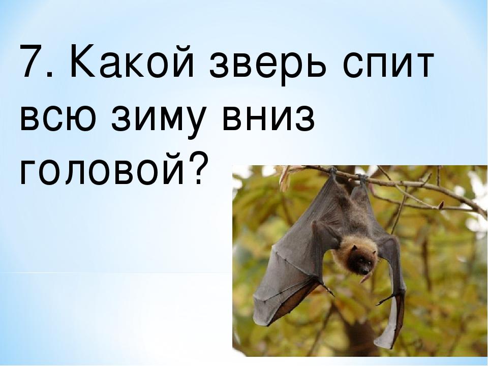 7. Какой зверь спит всю зиму вниз головой?