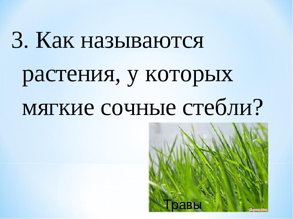 3. Как называются растения, у которых мягкие сочные стебли? Травы