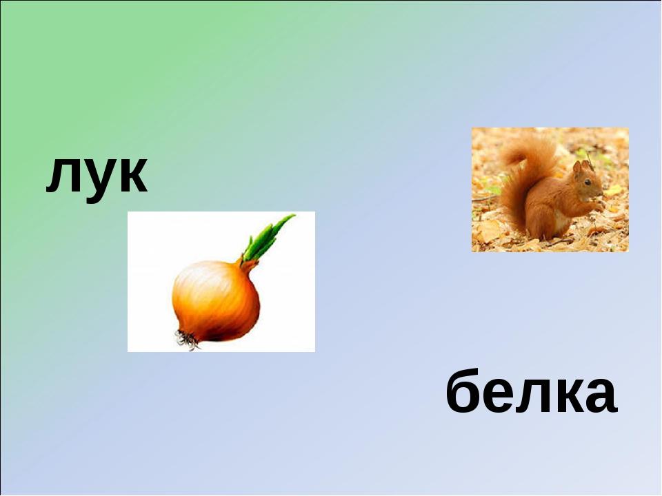 лук белка