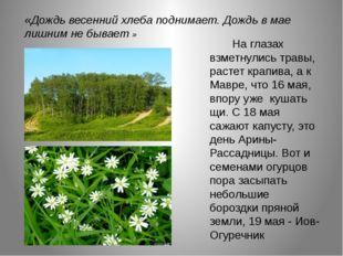 .    На глазах взметнулись травы, растет крапива, а к Мавре, что 16 мая,
