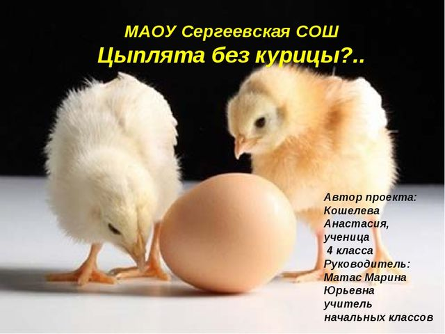 Автор проекта: Кошелева Анастасия, ученица 4 класса Руководитель: Матас Марин...