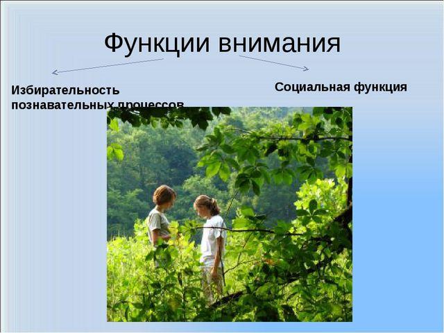 Функции внимания Избирательность познавательных процессов. Социальная функция