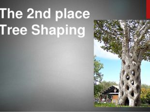 The 2nd place Tree Shaping