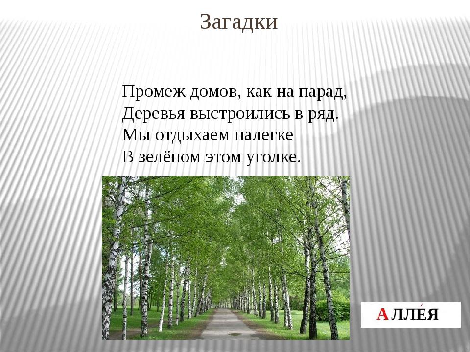 Промеж домов, как на парад, Деревья выстроились в ряд. Мы отдыхаем налегке В...