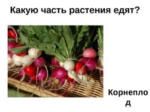 Корнеплод Какую часть растения едят?