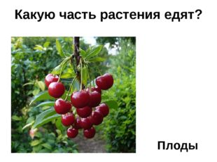 Какую часть растения едят? Плоды