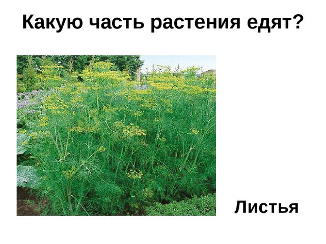 Листья Какую часть растения едят?