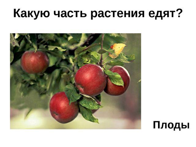 Плоды Какую часть растения едят?