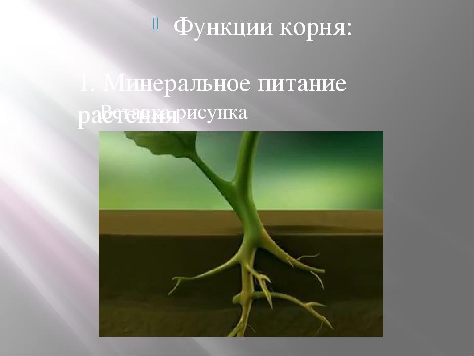Функции корня: 1. Минеральное питание растения.
