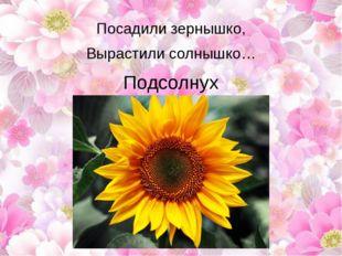 Посадили зернышко, Вырастили солнышко… Подсолнух