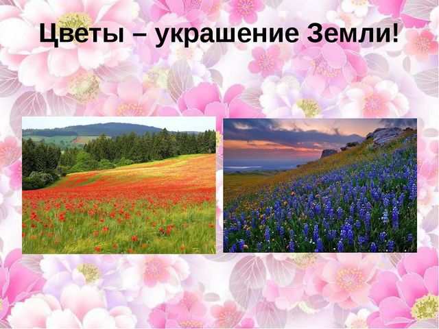 Цветы – украшение Земли!