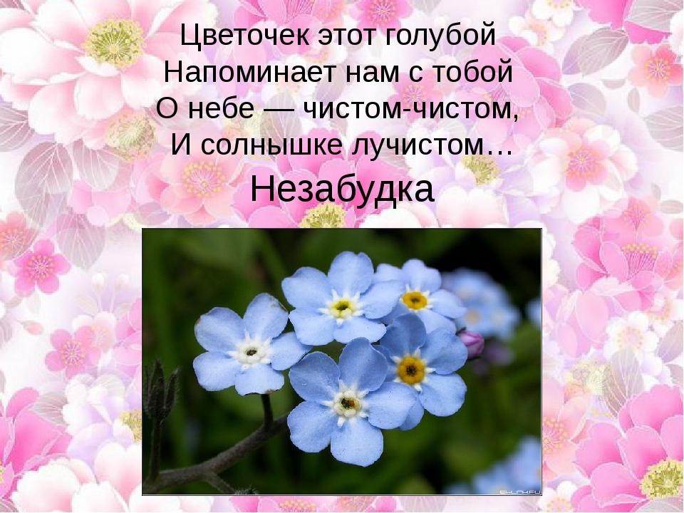 Цветочек этот голубой Напоминает нам с тобой О небе — чистом-чистом, И сол...