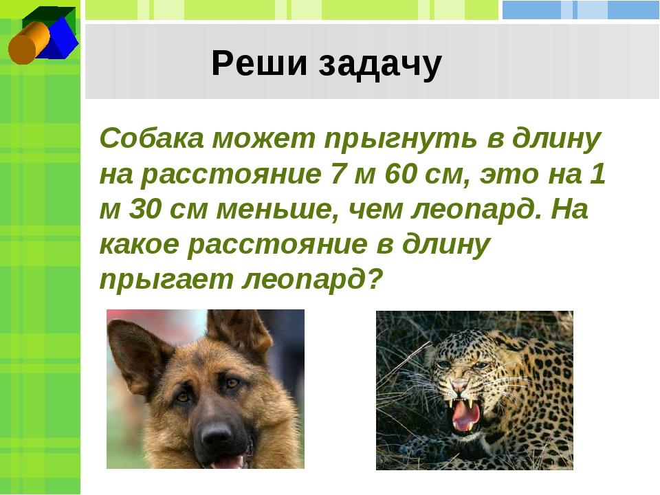 Реши задачу Собака может прыгнуть в длину на расстояние 7 м 60 см, это на 1 м...