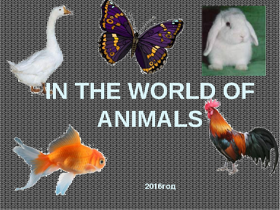 IN THE WORLD OF ANIMALS 2016год