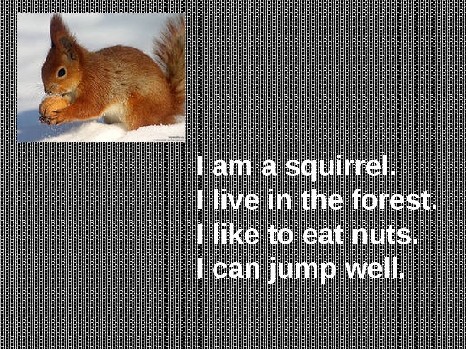 I am a squirrel. I live in the forest. I like to eat nuts. I can jump well.