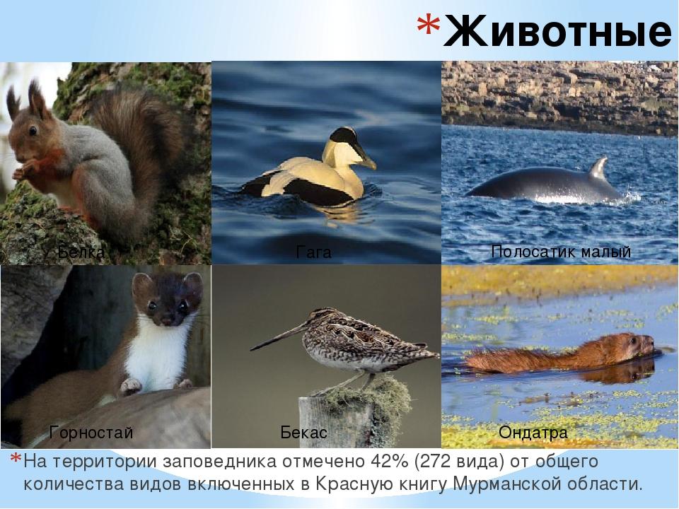 Животные заповедника На территории заповедника отмечено 42% (272 вида) от общ...