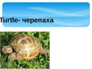 Turtle- черепаха