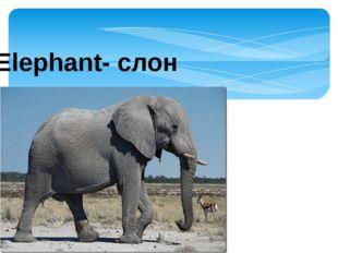 Elephant- слон