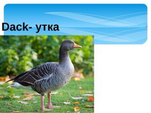 Dack- утка