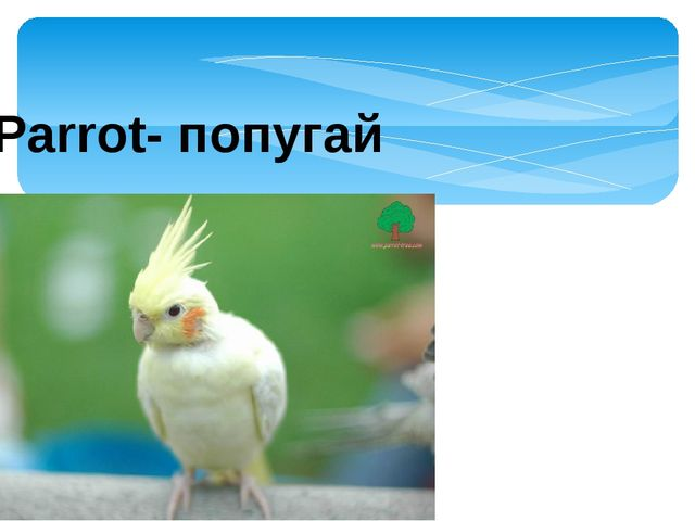 Parrot- попугай