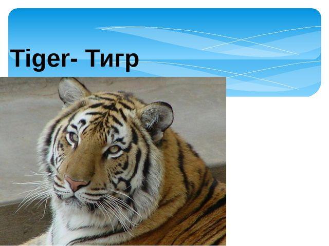 Tiger- Тигр