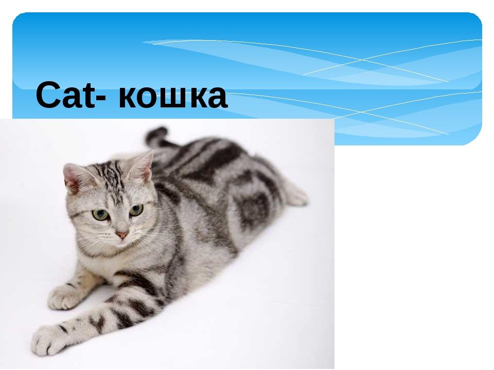 Cat- кошка