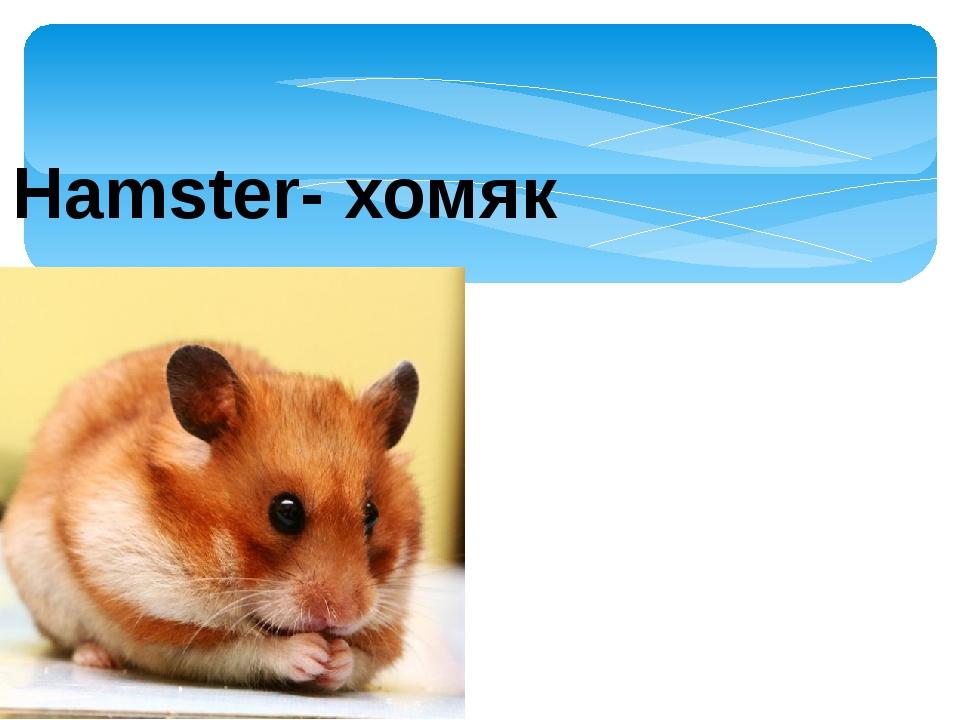 Hamster- хомяк