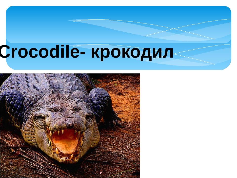 Сrocodile- крокодил