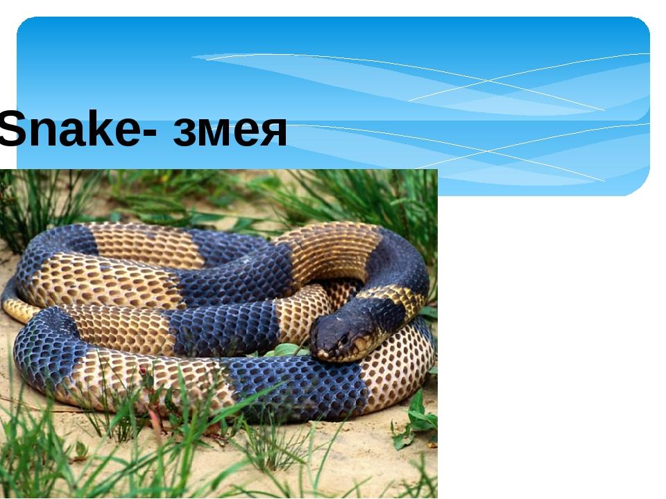 Snake- змея