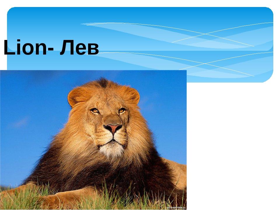 Lion- Лев