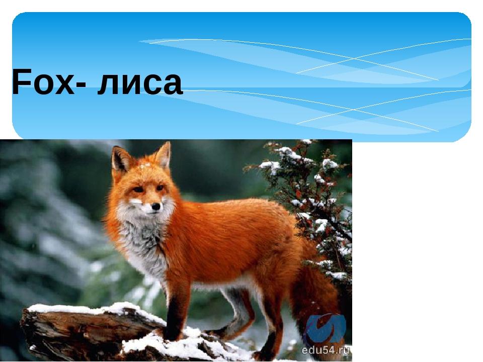 Fox- лиса