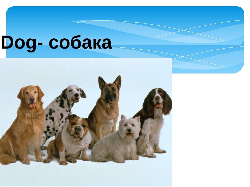 Dog- собака