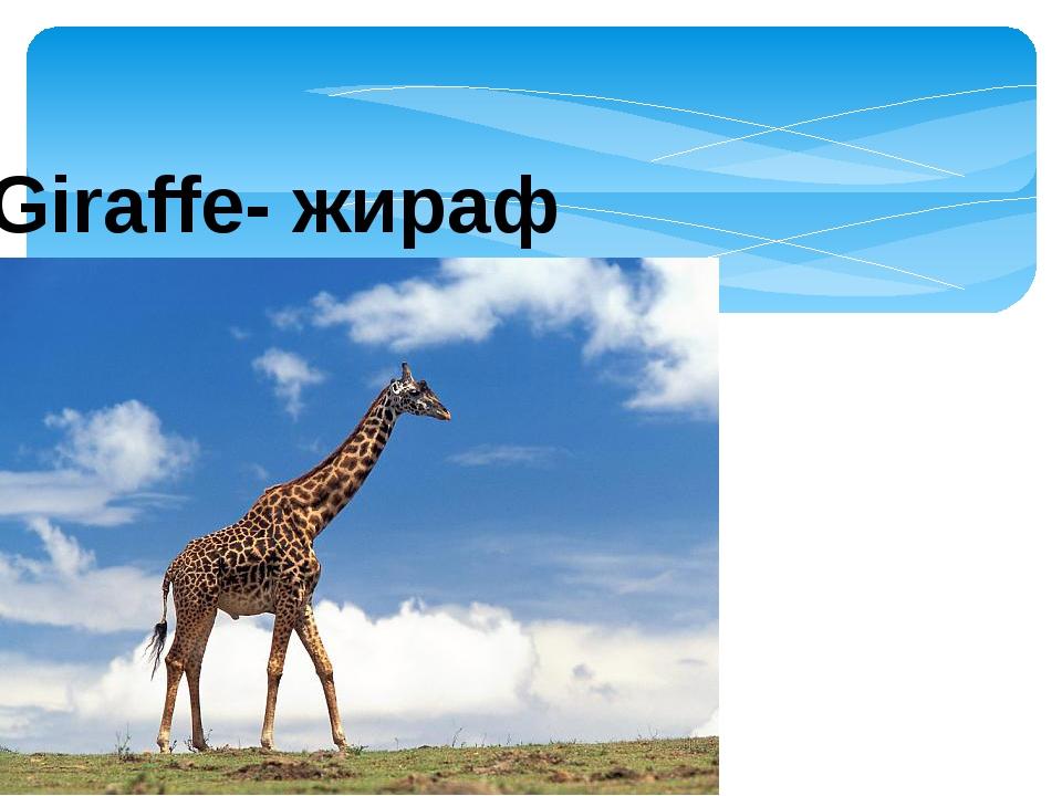 Giraffe- жираф