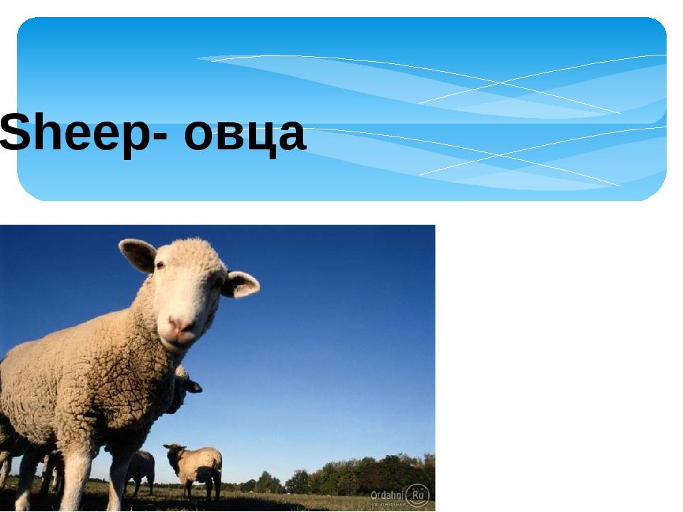 Sheep- овца