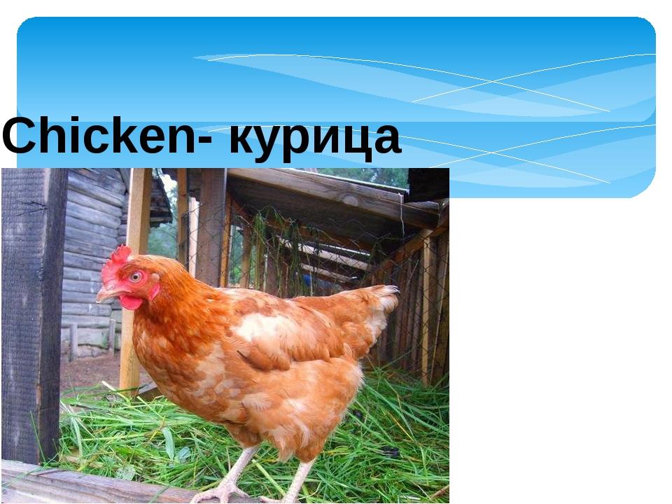 Сhicken- курица