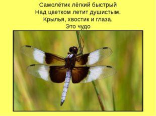Самолётик лёгкий быстрый Над цветком летит душистым. Крылья, хвостик и глаза.